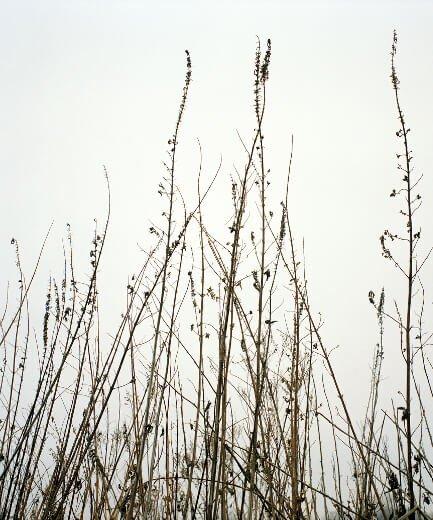 Winter 3 (Prairie Series)