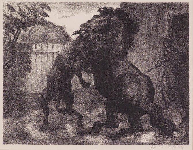 Stallion and Jack Fighting