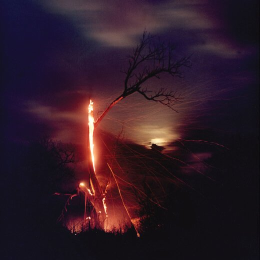 Burning Tree with Ryder Sky