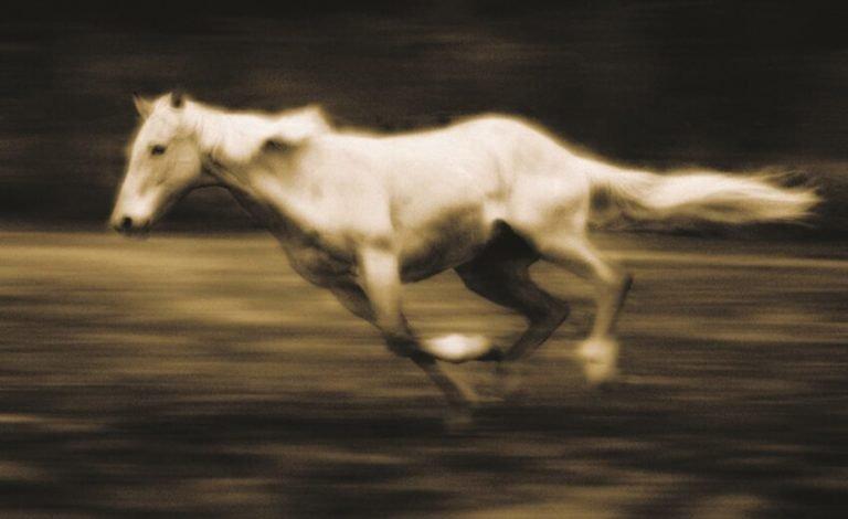 Horse #36